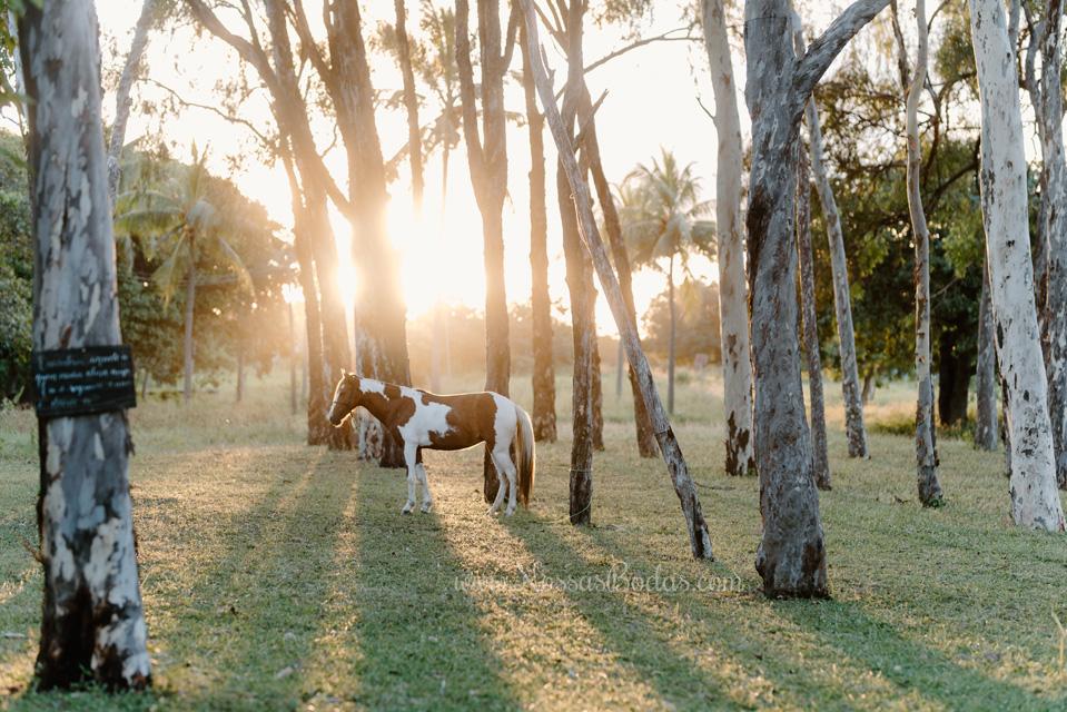 fazenda terra do sol ceará